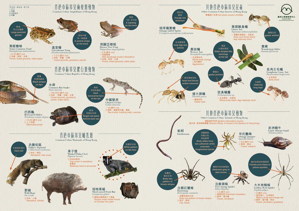 香港市區常見動物圖鑑(免費下載)Common Hong Kong urban animals (free download)
