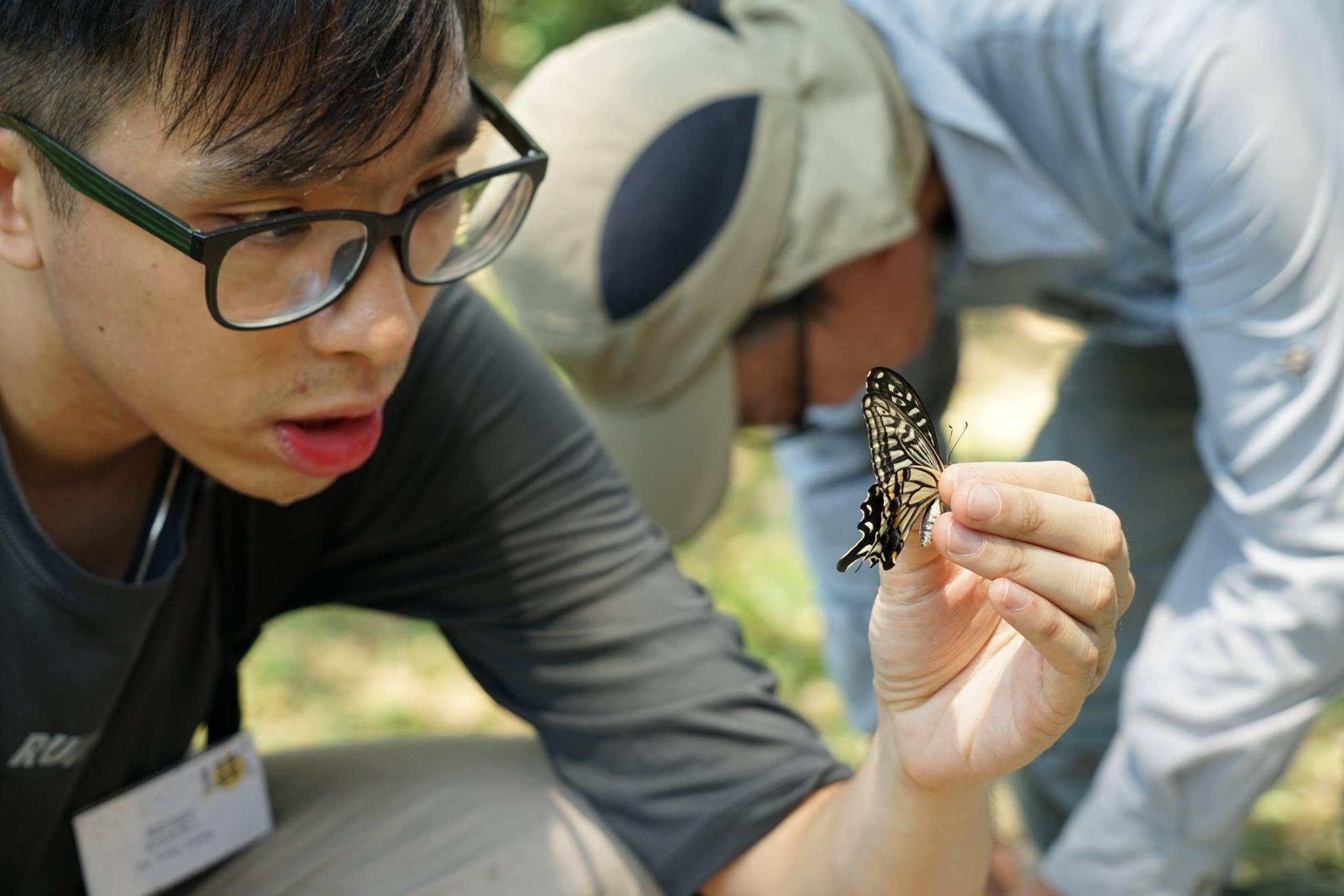 柑橘鳳蝶 Swallowtail
