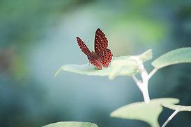 The Butterflies of Hong Kong