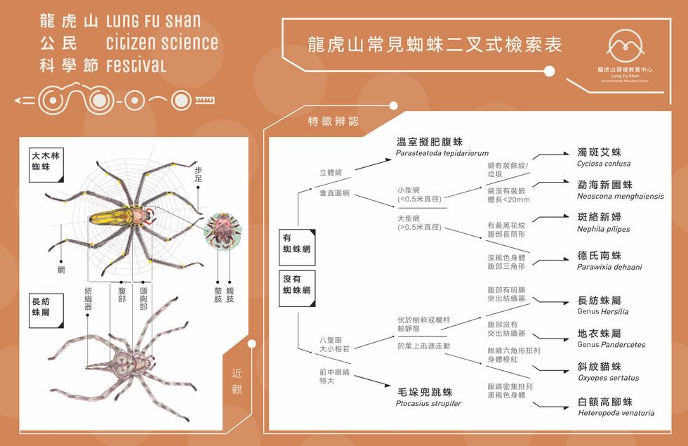 Spider ID Key.jpg