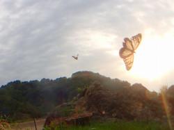 海を渡る蝶