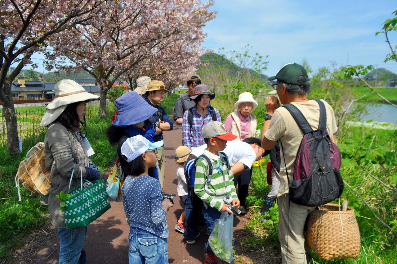 4月のときめき自然観察会