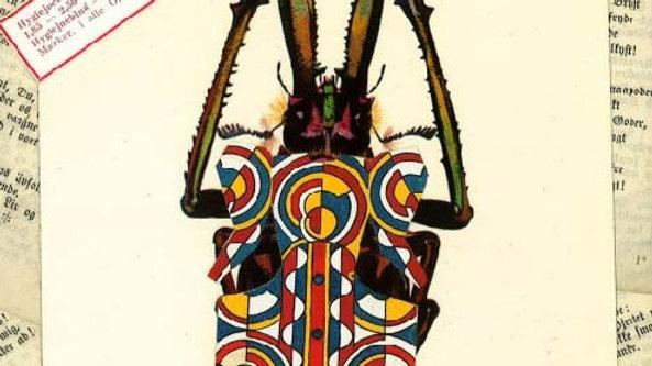 African fungus beetle