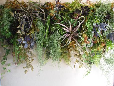 WALL PLANTS -ウォールプランツ-