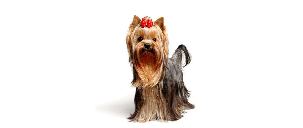 Dog-Sitting.jpg