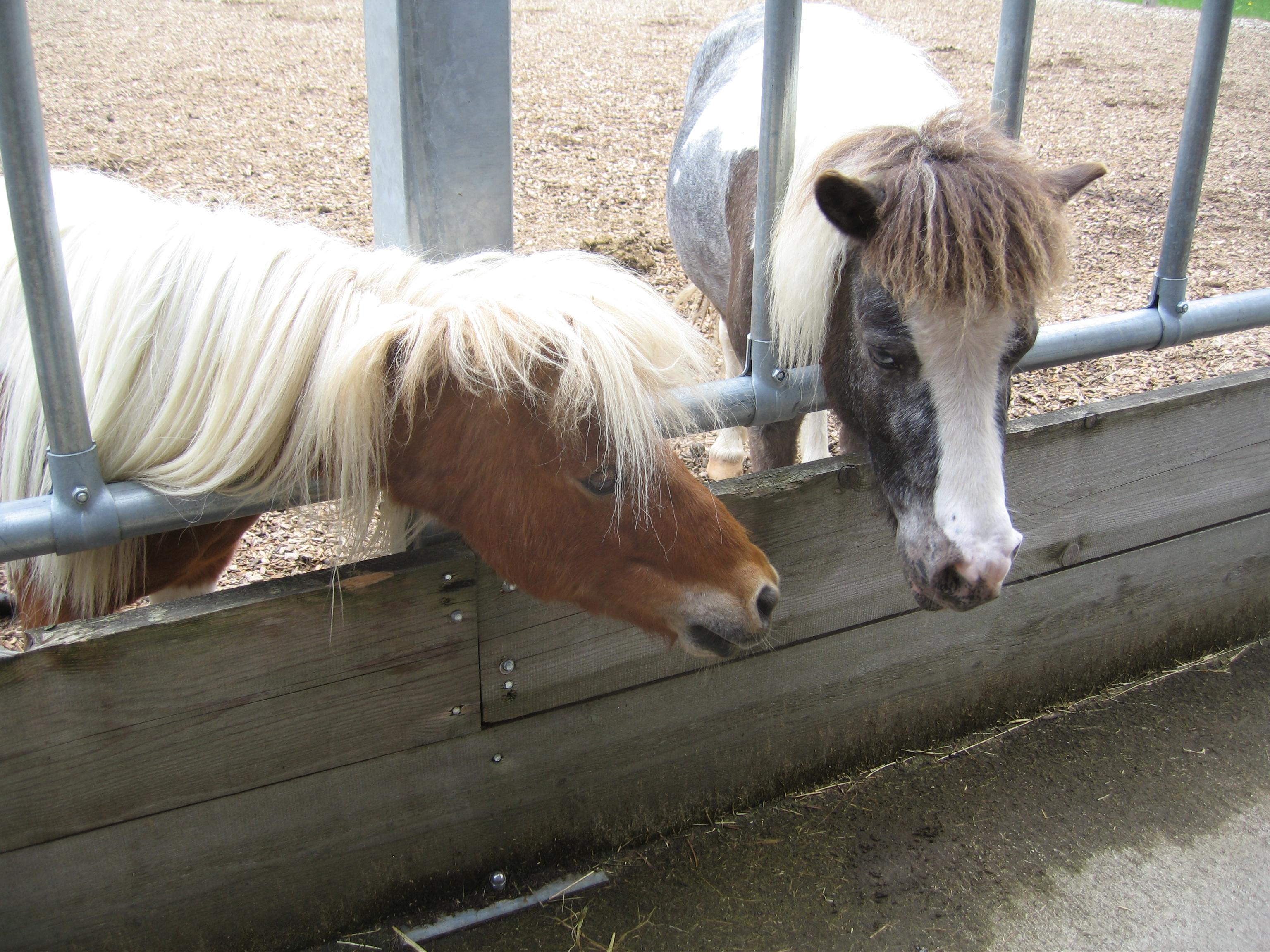 betagte Pferde