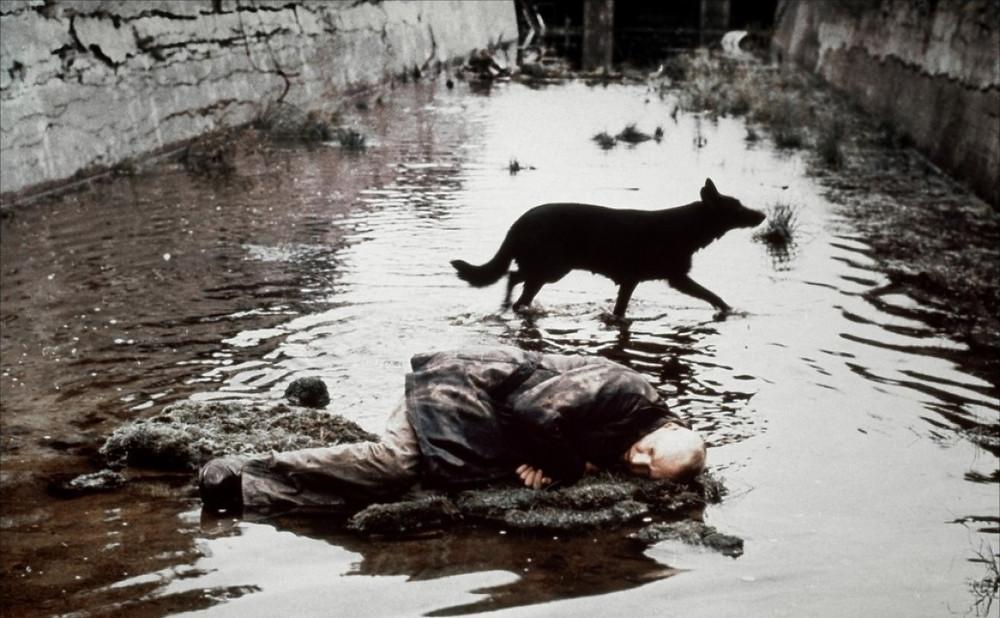 кадр из фильма сталкер, собака и лежащий в воде человек