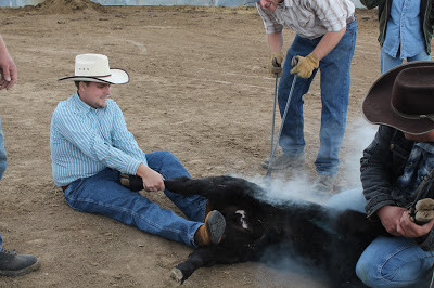 Terry teaching me to brand the calves, and all the cowboys
