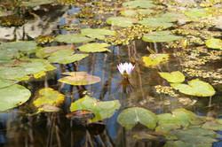 Traitement des étangs - Lyveo