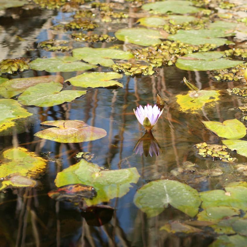 Discovery Center Wetlands Tour