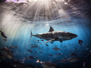 Prejudice: It's not the Shark, it's the Water