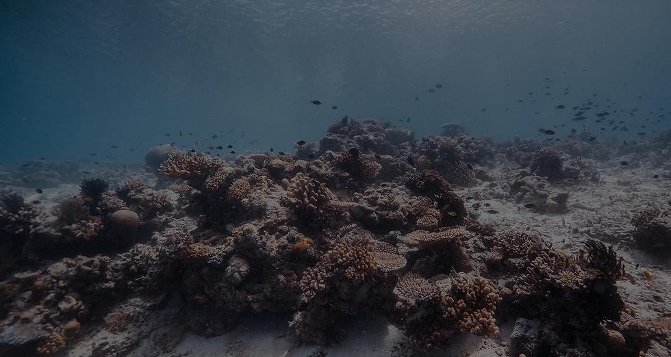 _Corals BG.png