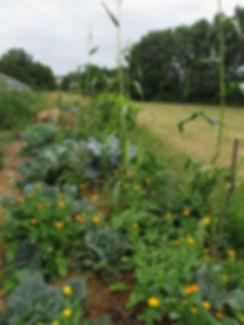 Vegetable garden with ornamental