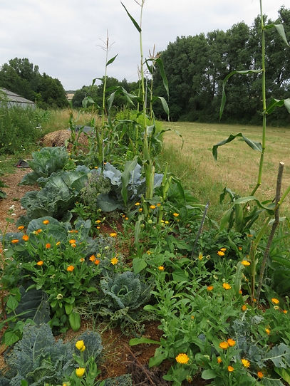 Vegetable garden with ornamental