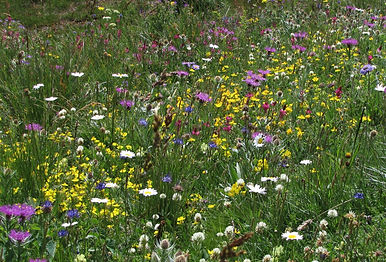 Very diverse natural flowering community