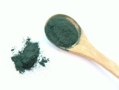 Les algues bleues à l'origine de la vie : Spirulina Maxima et  Spirulina Platensis