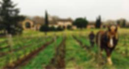 Cheval vigne hiver.jpg