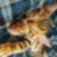 sleepy kitten girl.jpg