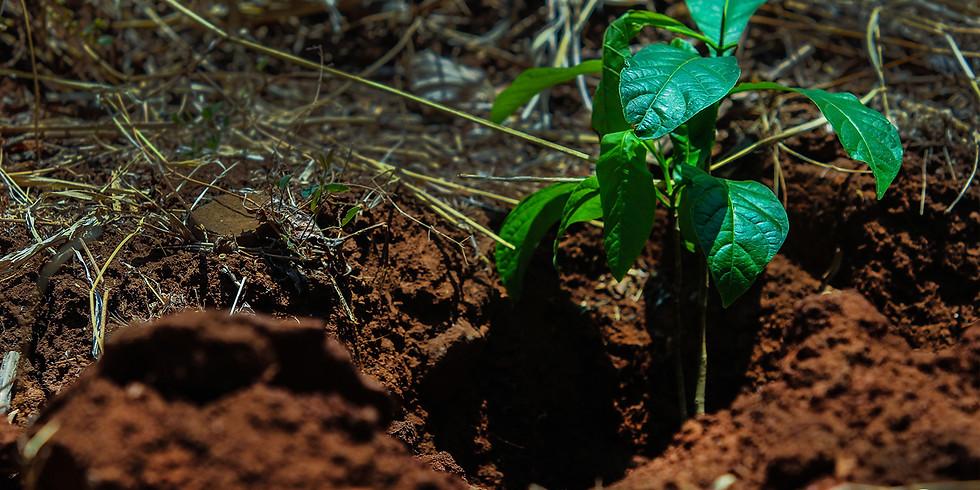 Reforestación con el Ministerio de Medio Ambiente