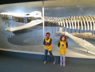 Exploring the Montessori Science Curriculum