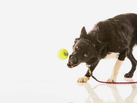5 начина да помогнете на своето куче да живее по-дълго и по-щастливо