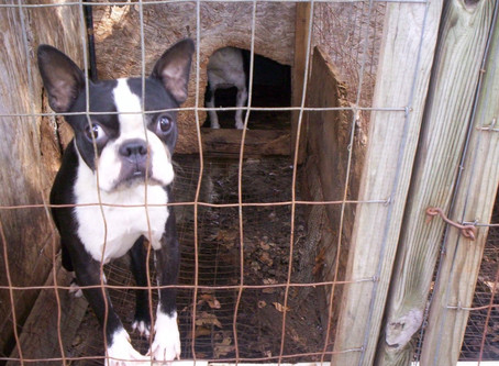 Зад кулисите на търговията с животни: домашните любимци като стока