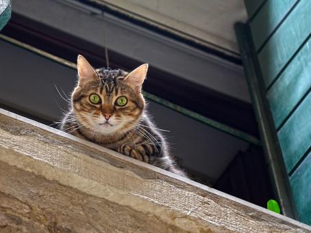 Котките не винаги падат на краката си: Синдром на падащите котки