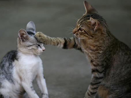 Полезни съвети за запознаване на две котки
