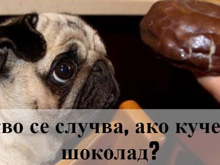 Кучетата и шоколадът