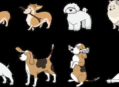 Любопитното и странно поведение при кучетата – обяснено!