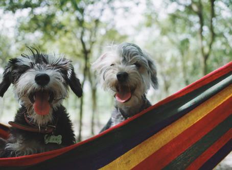 10 неочаквани ползи да имате куче, за които дори не сте и подозирали!