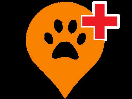 Help a Paw: Новото приложение, което ще ни помогне да спасим повече животи!