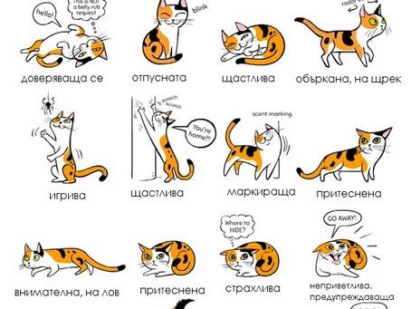 Котки: език на тялото