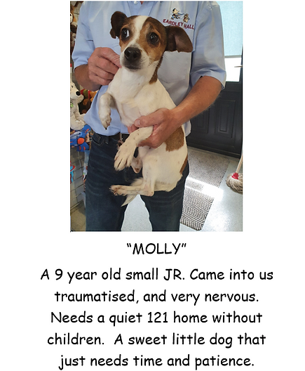 MOLLY POSTER PIC.PNG