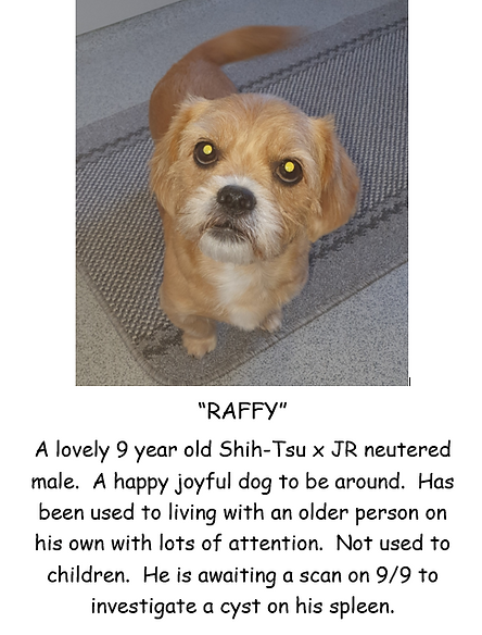 RAFFY POSTER PIC.PNG