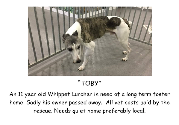 TOBY POSTER PIC OLD DOG.PNG