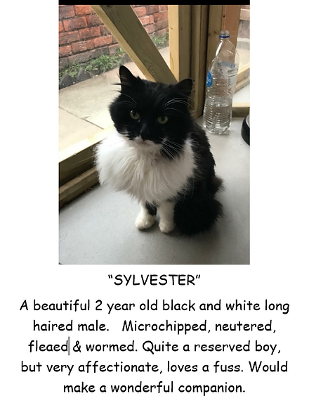 SYLVESTER POSTER PIC.PNG