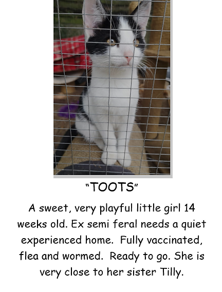 TOOTS KITTEN POSTER PIC.PNG