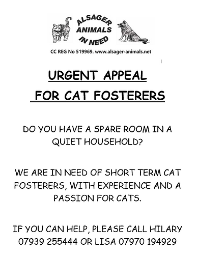 CAT FOSTERER APPEAL PIC1.PNG