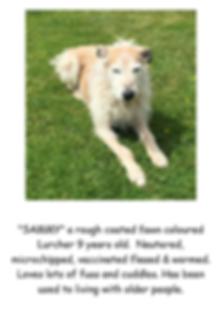 SAMMY LURCHER POSTER PIC.PNG