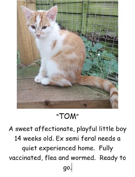 TOM KITTEN POSTER PIC.PNG