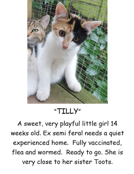 TILLY KITTEN POSTER PIC.PNG
