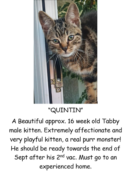 QUINTIN POSTER PIC.PNG