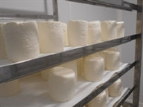 fond_fromagerie-WE6c7f894642.jpg