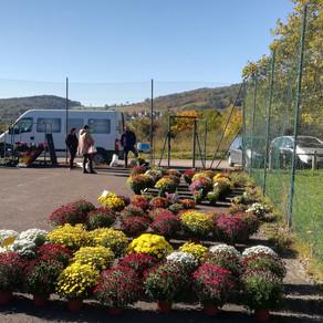 Troc plantes et vente de chrysanthèmes du 24 octobre 2021