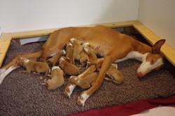 Newborn Africa Litter