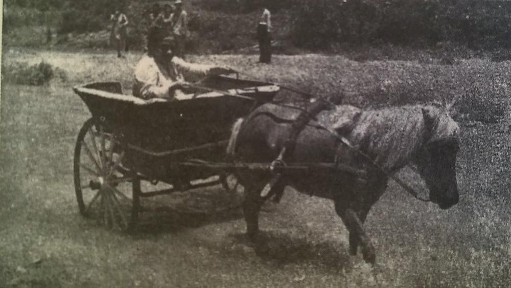 María Libertad Gómez se transportaba en un quitrín por los difíciles caminos en Utuado. Tomada del libro María Libertad Gómez Garriga, una mujer con voluntad de acero.