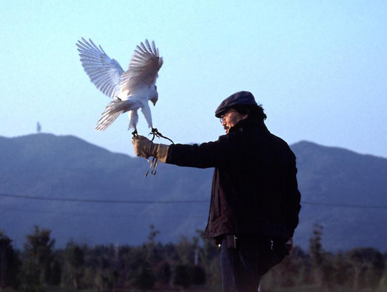 鷹と3.jpg