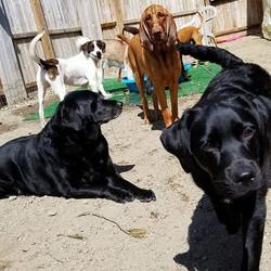 #doggiedaycare #monadnockcaninecenter