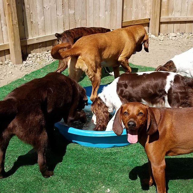 #pool time #doggiedaycare